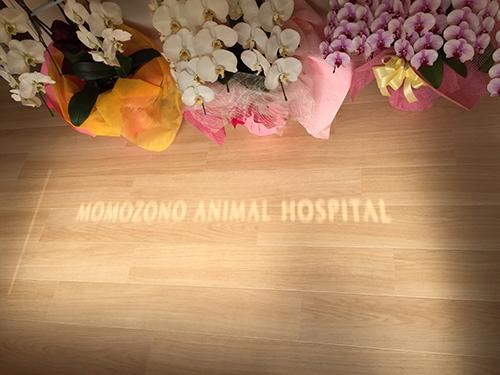 桃園動物病院